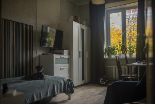 Tv on a table in a room with a dog and open windows